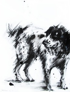 Millie the cocker spaniel, by Laura Fleming.