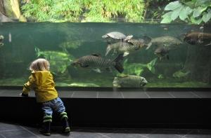 Looking for Nemo at the aquarium.